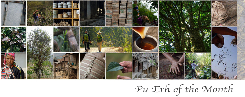 Pu-Erh-of-the-Month-Title